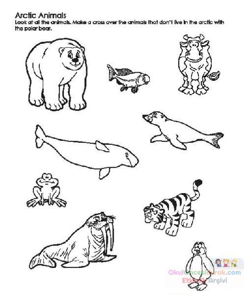 Balık Hayvanlar Deniz Canlıları Boyama 11 Preschool Activity