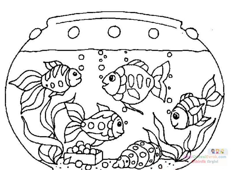 Balık Hayvanlar Deniz Canlıları Boyama 40 Preschool Activity