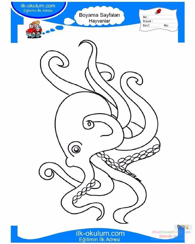 çocuklar Için Hayvan Ahtapot Boyama Sayfası 19 Preschool Activity