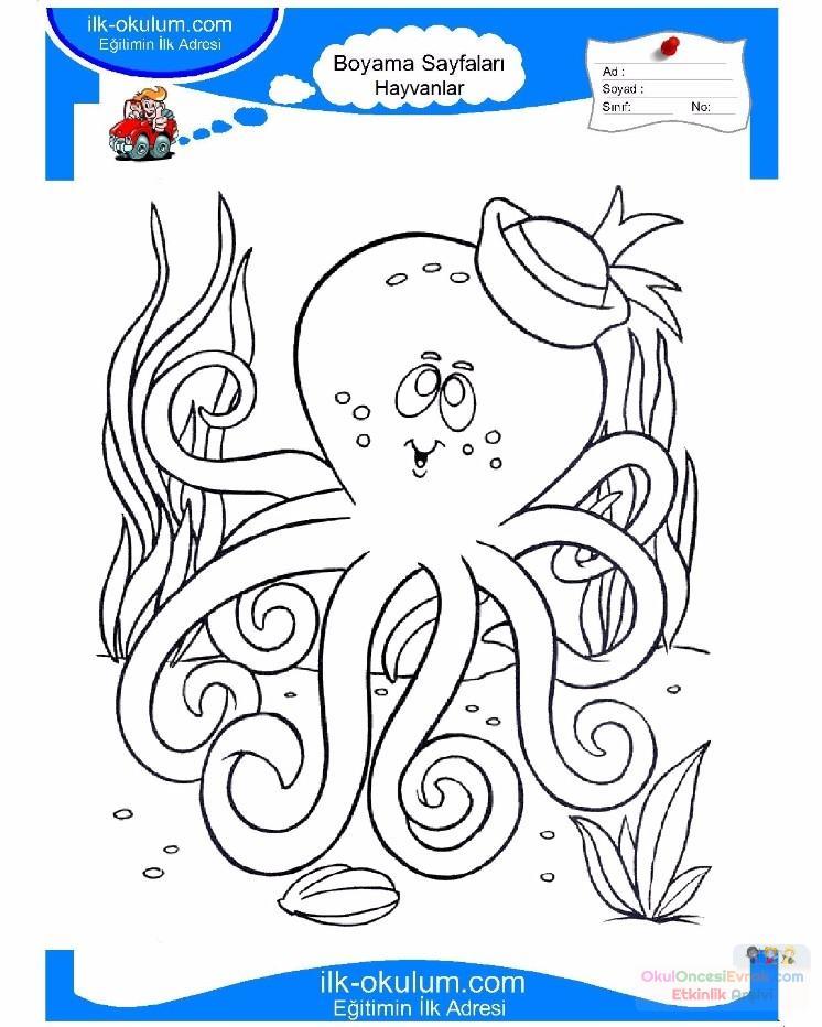 Cocuklar Icin Hayvan Ahtapot Boyama Sayfasi 24 Preschool Activity