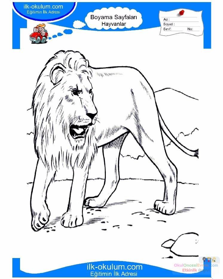 Cocuklar Icin Hayvan Aslan Boyama Sayfasi 1 Preschool Activity