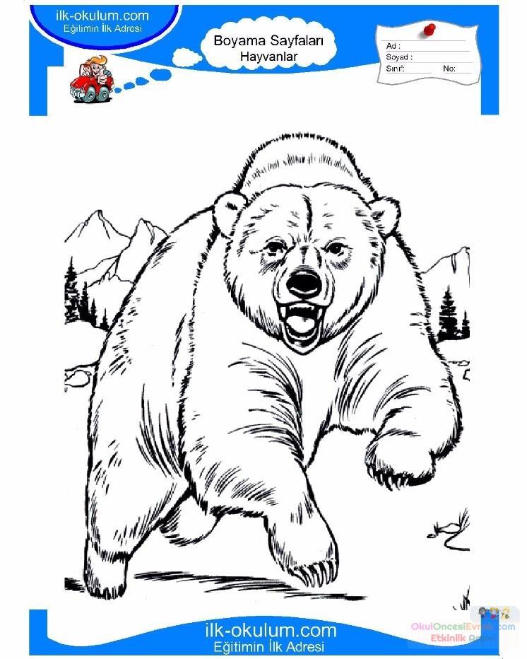çocuklar Için Hayvan Ayı Boyama Sayfası 21 Preschool Activity