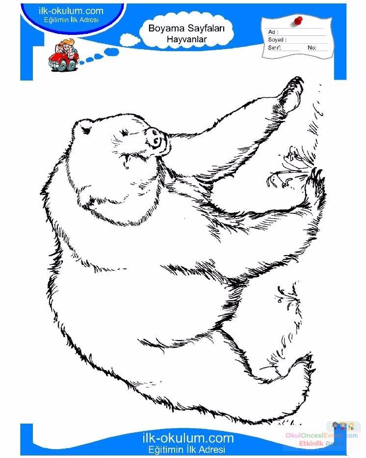 çocuklar Için Hayvan Ayı Boyama Sayfası 7 Preschool Activity