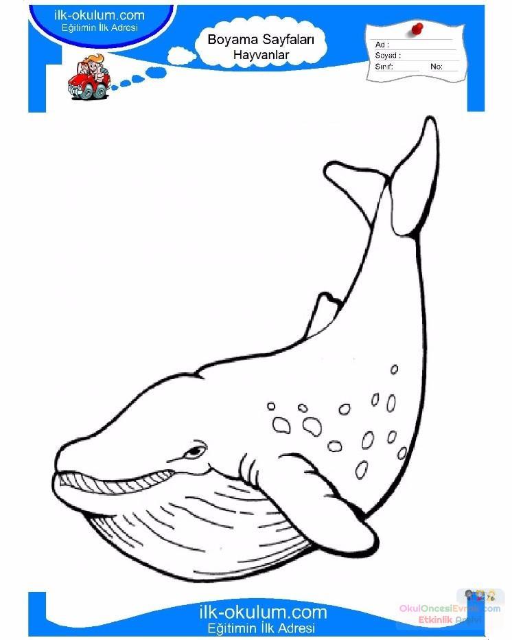 çocuklar Için Hayvan Balina Boyama Sayfası 20 Preschool Activity