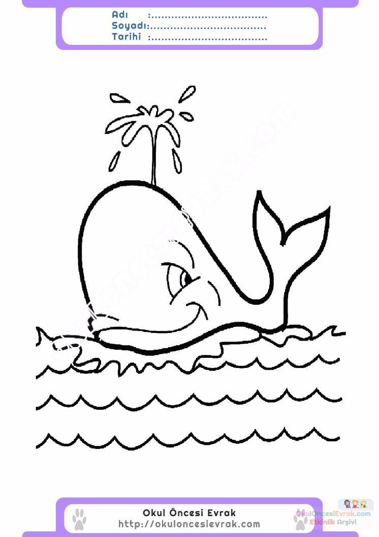 çocuklar Için Hayvan Balina Boyama Sayfası 34 Preschool Activity