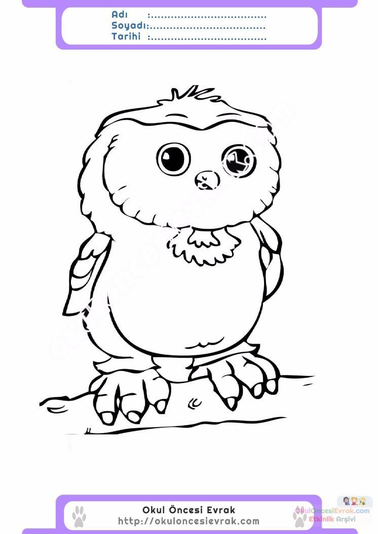 çocuklar Için Hayvan Baykuş Boyama Sayfası 17 Preschool Activity