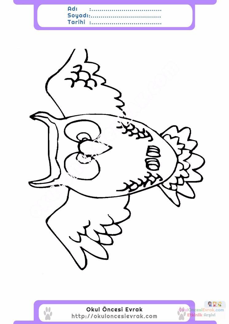 çocuklar Için Hayvan Baykuş Boyama Sayfası 26 Preschool Activity