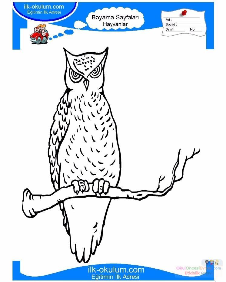 çocuklar Için Hayvan Baykuş Boyama Sayfası 34 Preschool Activity