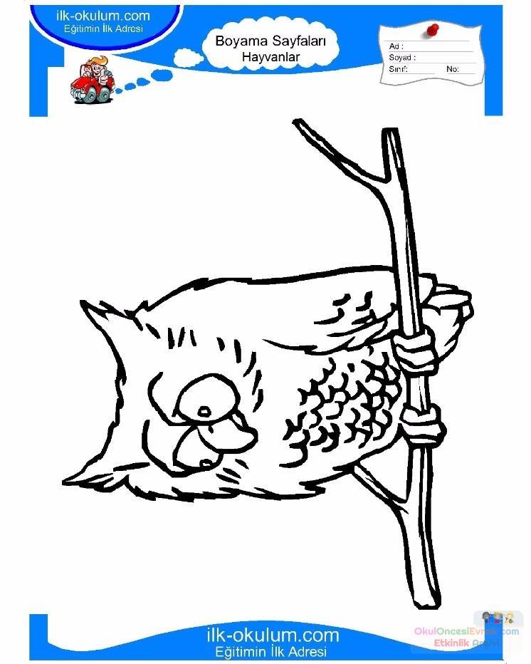 Cocuklar Icin Hayvan Baykus Boyama Sayfasi 35 Preschool Activity