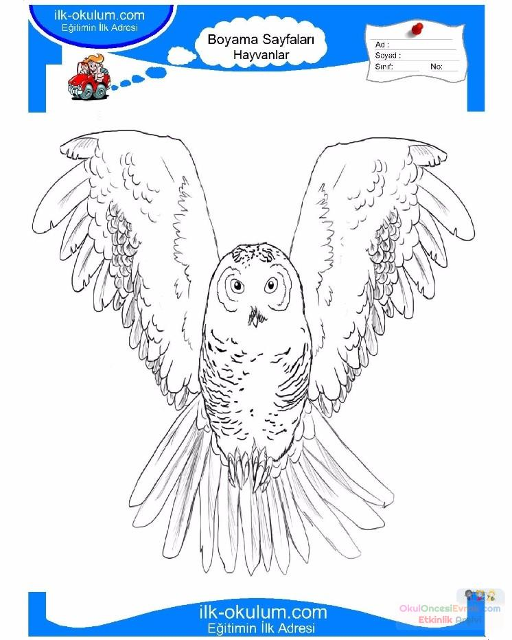 çocuklar Için Hayvan Baykuş Boyama Sayfası 44 Preschool Activity