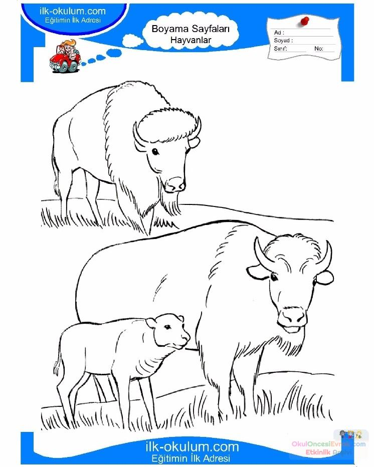 çocuklar Için Hayvan Boğa Boyama Sayfası 8 Preschool Activity