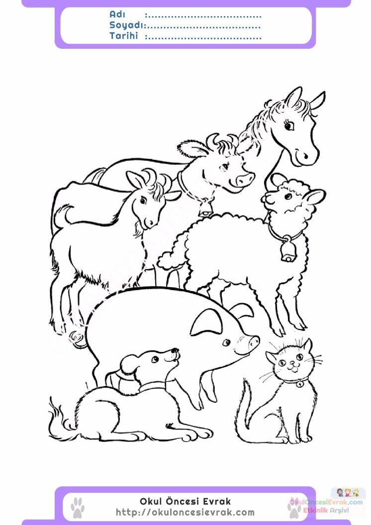 çocuklar Için Hayvan çiftlik Hayvanları Boyama Sayfası 23