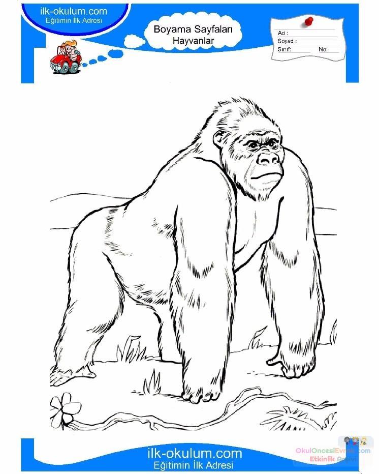 Gorille dessin