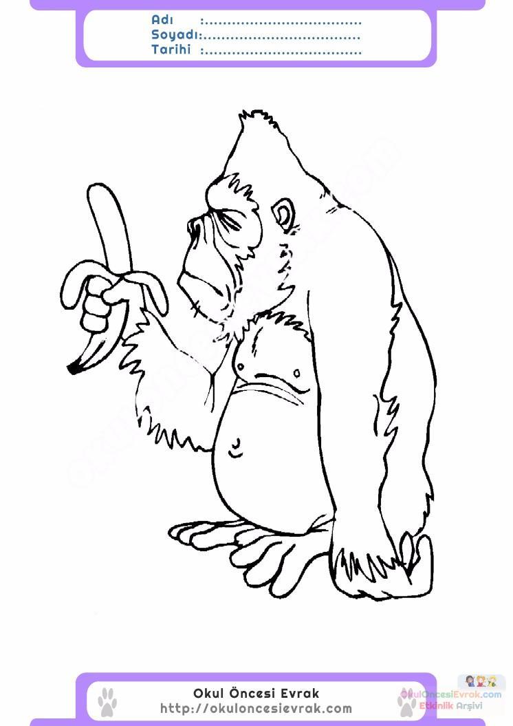çocuklar Için Hayvan Goril Boyama Sayfası 12 Preschool Activity