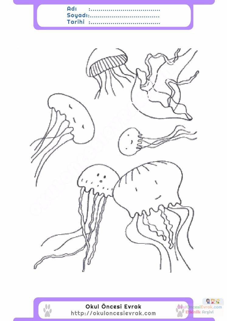 çocuklar Için Hayvan Hayvan Deniz Anası Boyama Sayfası 9 Preschool