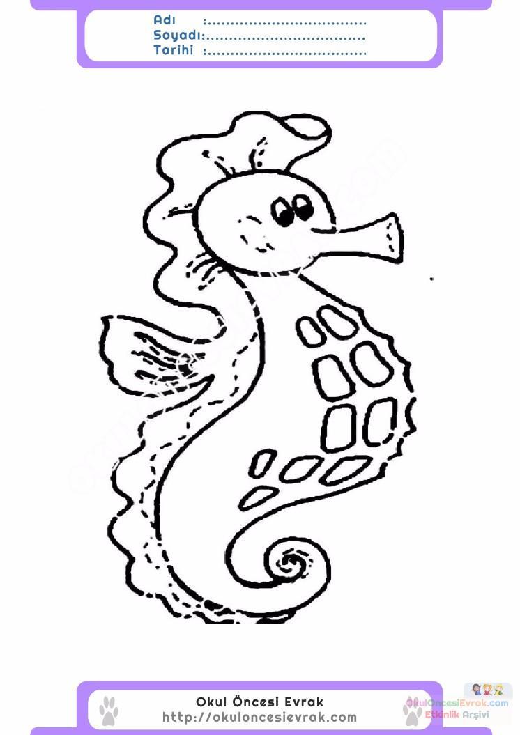 çocuklar Için Hayvan Hayvan Deniz Atı Boyama Sayfası 1 Preschool