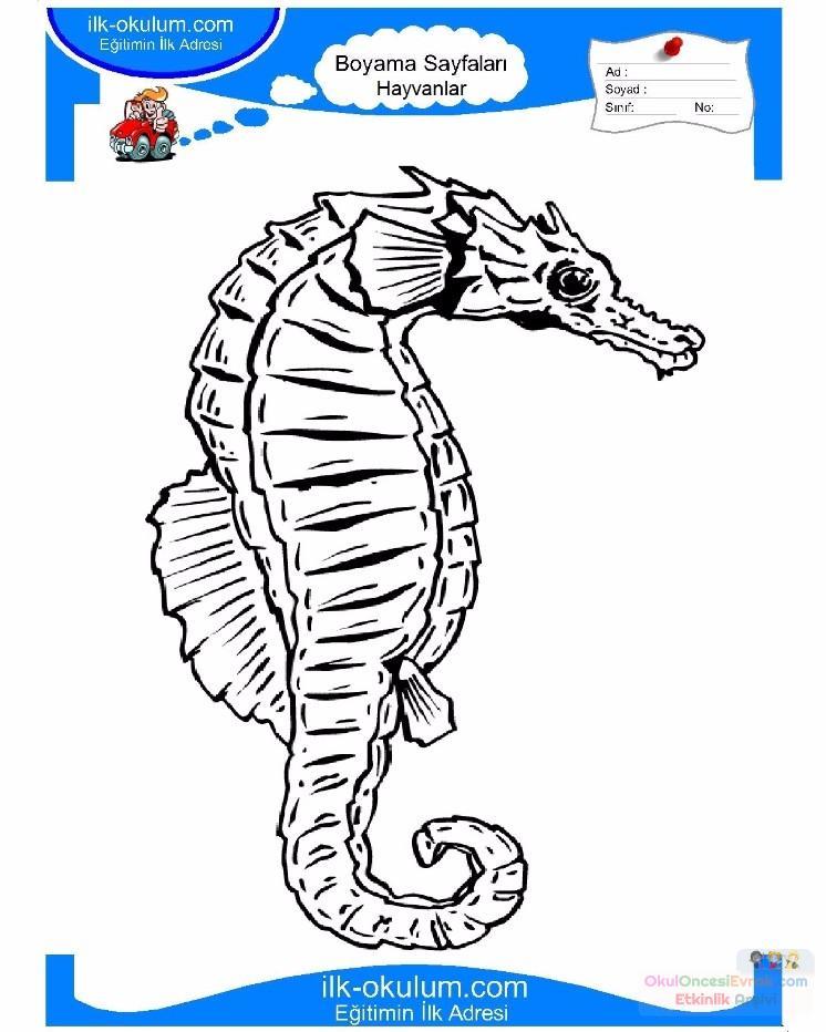 çocuklar Için Hayvan Hayvan Deniz Atı Boyama Sayfası 2 Preschool