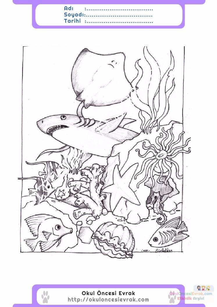 çocuklar Için Hayvan Hayvan Deniz Yaşamı Boyama Sayfası 9