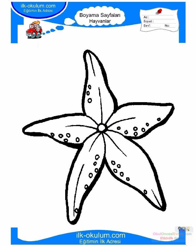 çocuklar Için Hayvan Hayvan Deniz Yıldızı Boyama Sayfası 1