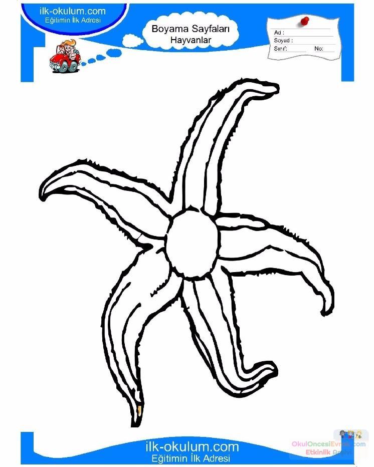 çocuklar Için Hayvan Hayvan Deniz Yıldızı Boyama Sayfası 12