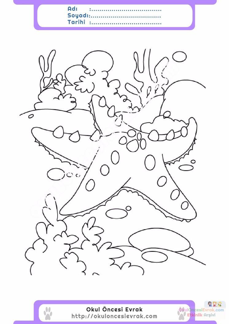 çocuklar Için Hayvan Hayvan Deniz Yıldızı Boyama Sayfası 7