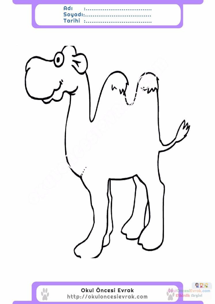çocuklar Için Hayvan Hayvan Deve Boyama Sayfası 17 Preschool Activity