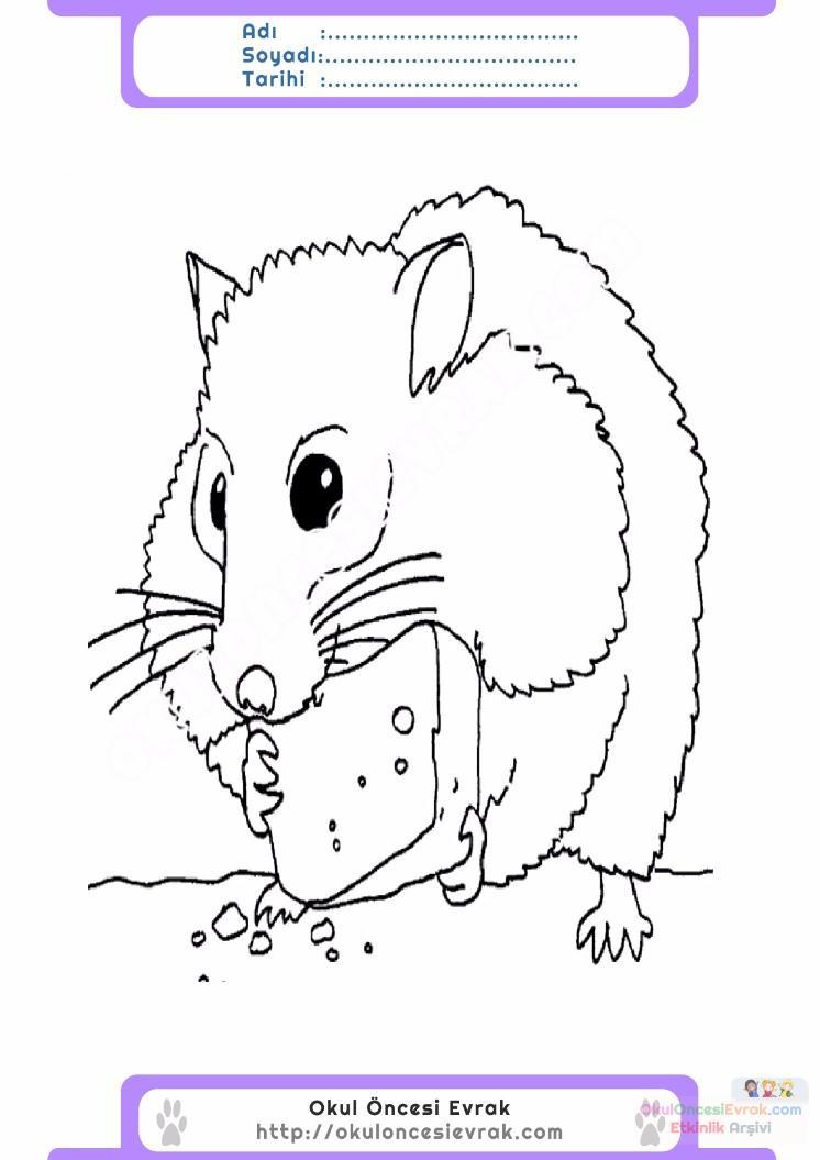 çocuklar Için Hayvan Hayvan Fare Boyama Sayfası 3 Preschool Activity