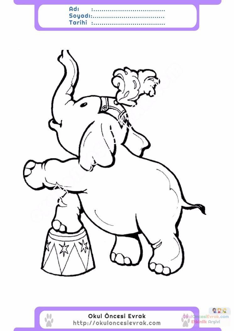 çocuklar Için Hayvan Hayvan Fil Boyama Sayfası 37 Preschool Activity