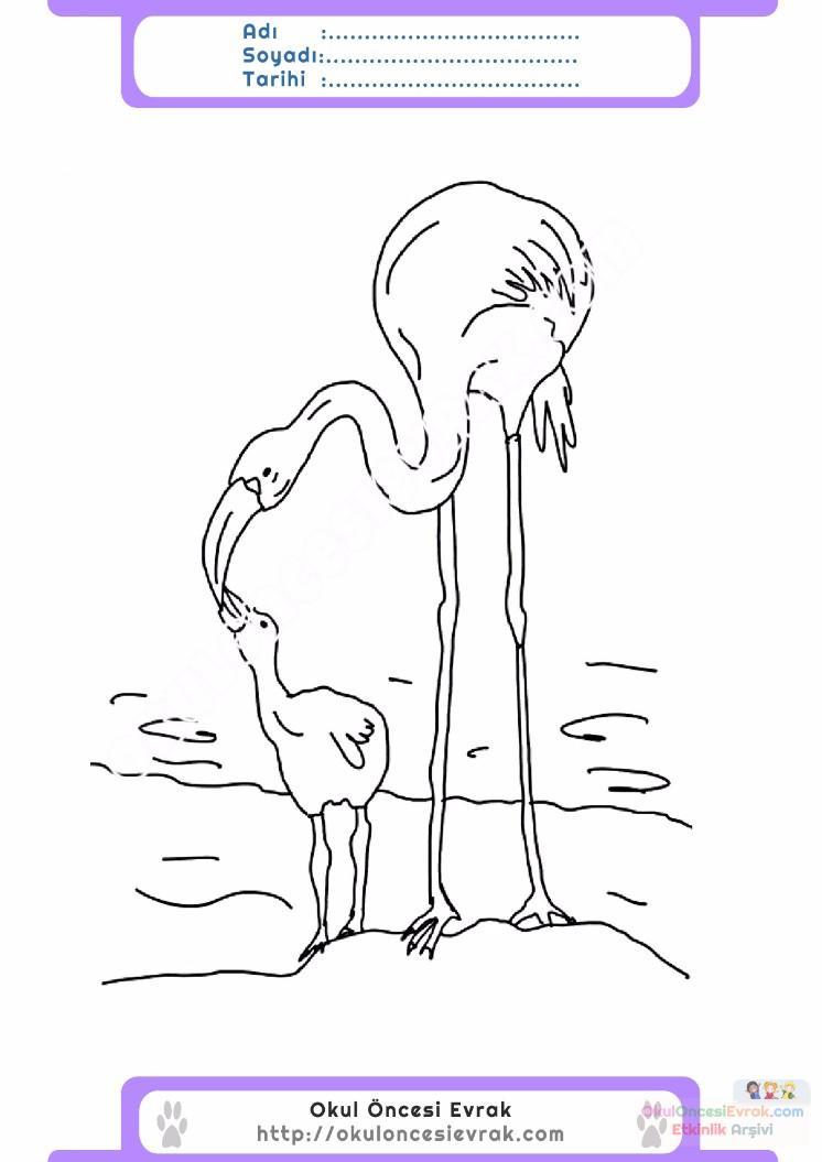 çocuklar Için Hayvan Hayvan Flamingo Boyama Sayfası 1 Preschool