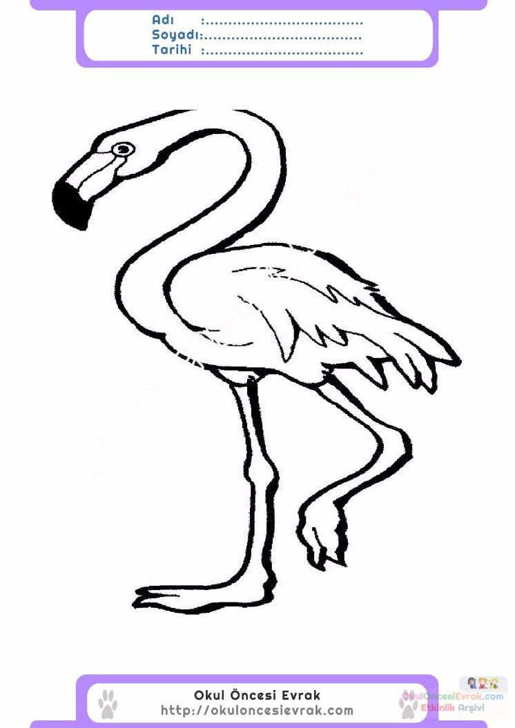 çocuklar Için Hayvan Hayvan Flamingo Boyama Sayfası 10 Preschool