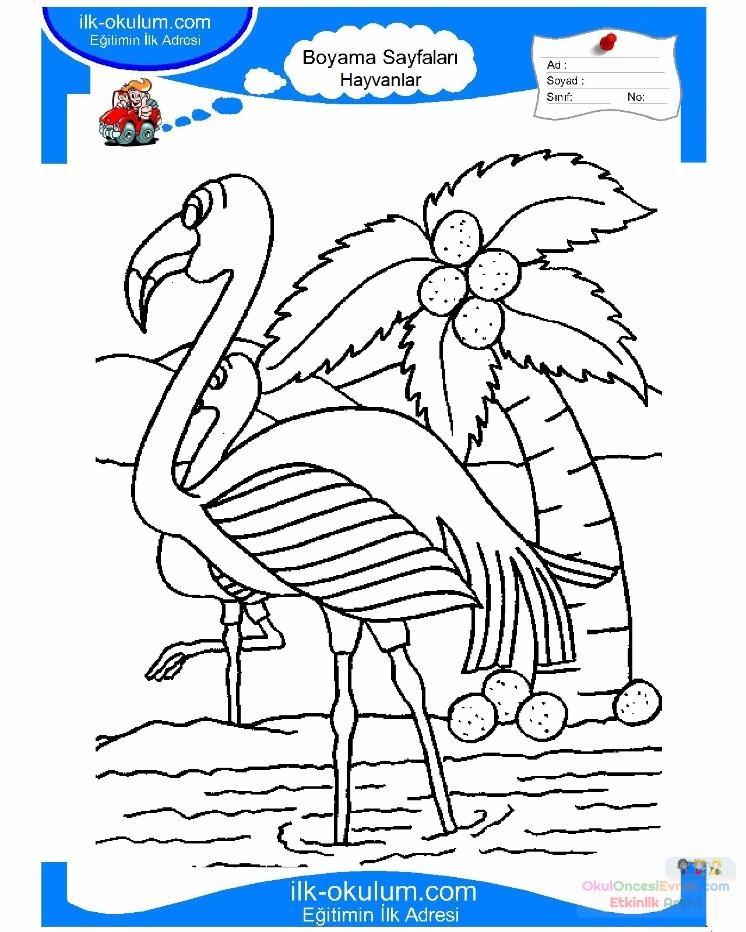 çocuklar Için Hayvan Hayvan Flamingo Boyama Sayfası 11 Preschool