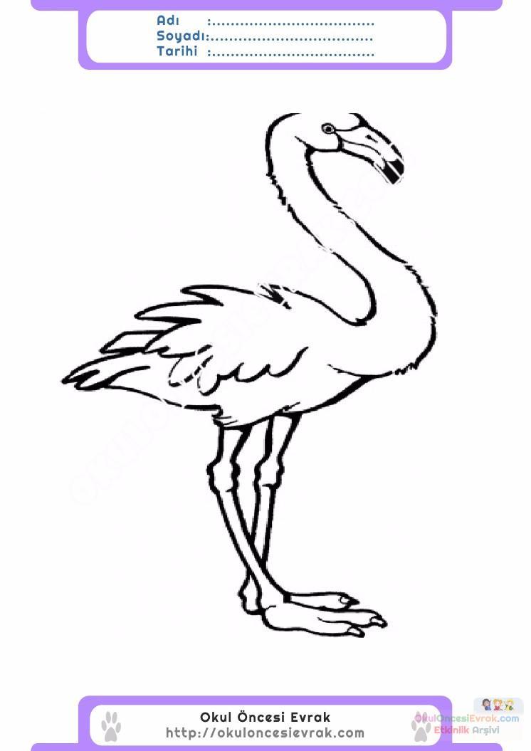 çocuklar Için Hayvan Hayvan Flamingo Boyama Sayfası 3 Preschool