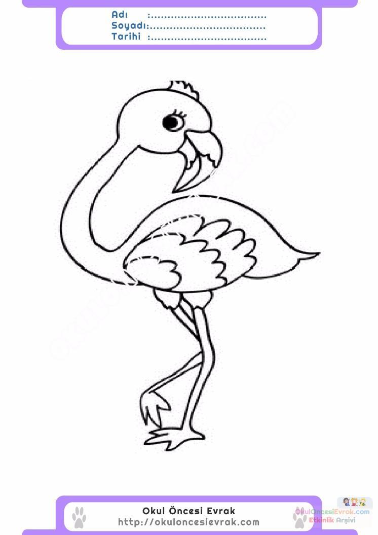 çocuklar Için Hayvan Hayvan Flamingo Boyama Sayfası 8 Preschool