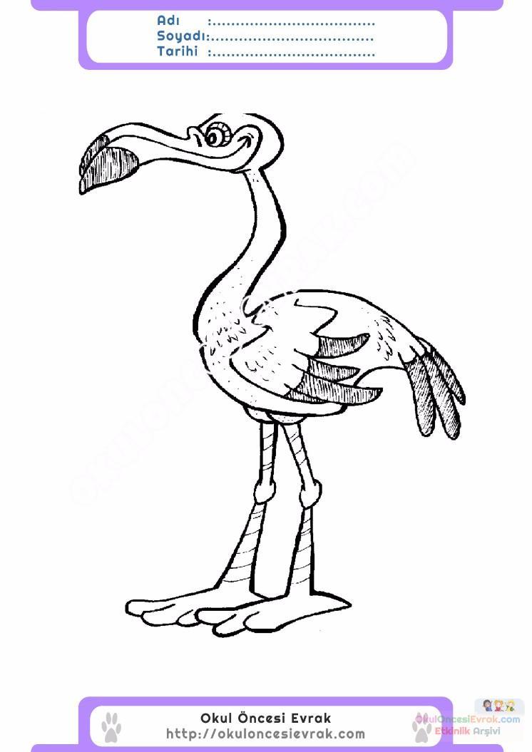 çocuklar Için Hayvan Hayvan Flamingo Boyama Sayfası 9 Preschool