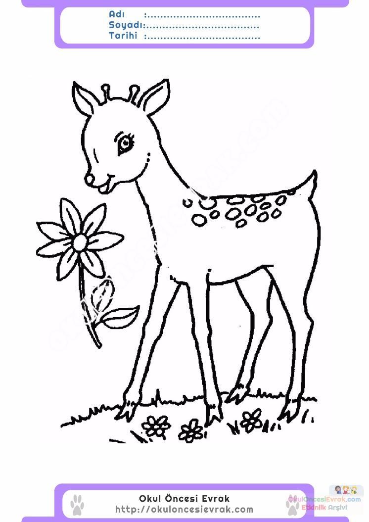 çocuklar Için Hayvan Hayvan Geyik Boyama Sayfası 4 Preschool Activity