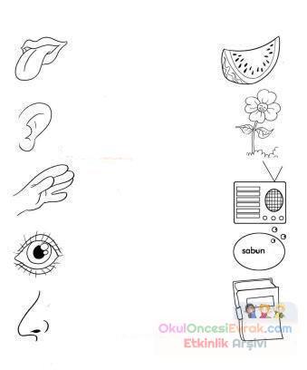 Duyu Organları 1 Preschool Activity