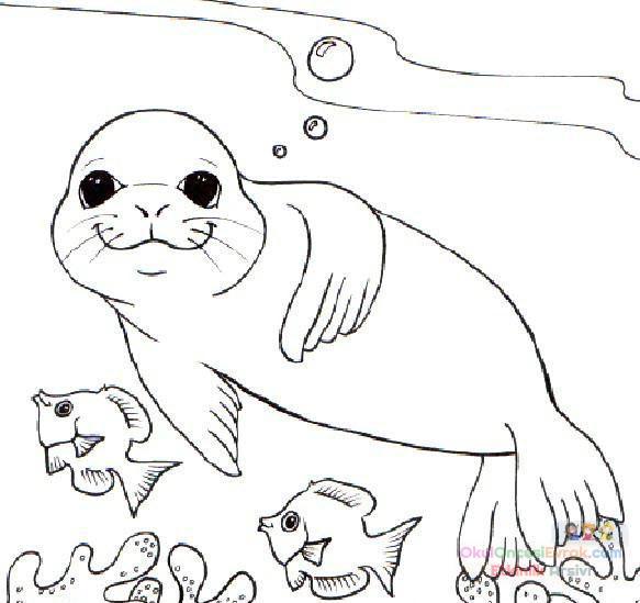 Fok Balığı Hayvanlar Deniz Canlıları Boyama 12 Preschool Activity