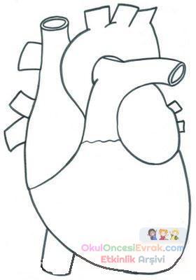 Iç Organlar 5 Preschool Activity