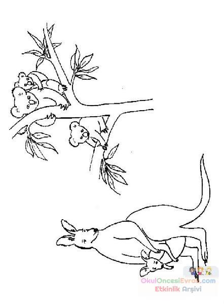 Kanguru Hayvanlar Boyama 4