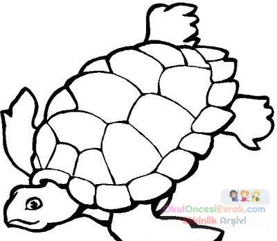 Kaplumbağa Hayvanlar Boyama 1148 Preschool Activity