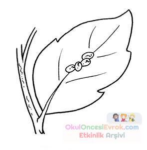 kelebeğin oluşumu video indir