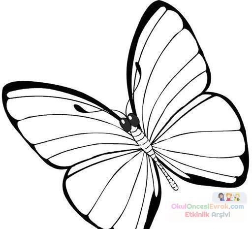 Kelebek Hayvanlar Boyama 31 Preschool Activity