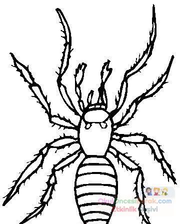 örümcek Hayvanlar Boyama 641 Preschool Activity