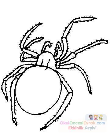 örümcek Hayvanlar Boyama 645 Preschool Activity