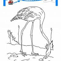 çocuklar Için Hayvan Hayvan Flamingo Boyama Sayfası 16 Preschool