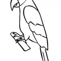 Papağan Resmi Boyama Gazetesujin