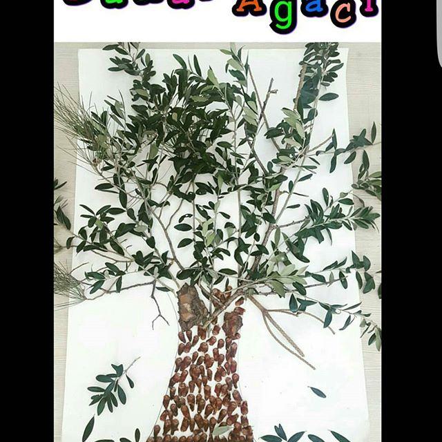 Zeytin Ağacı Preschool Activity