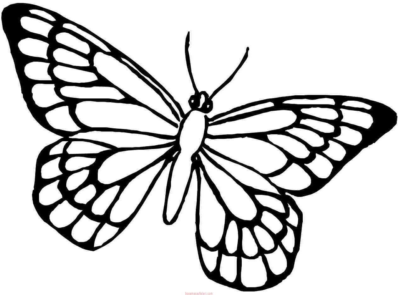 Kelebek şablonları 15 Preschool Activity