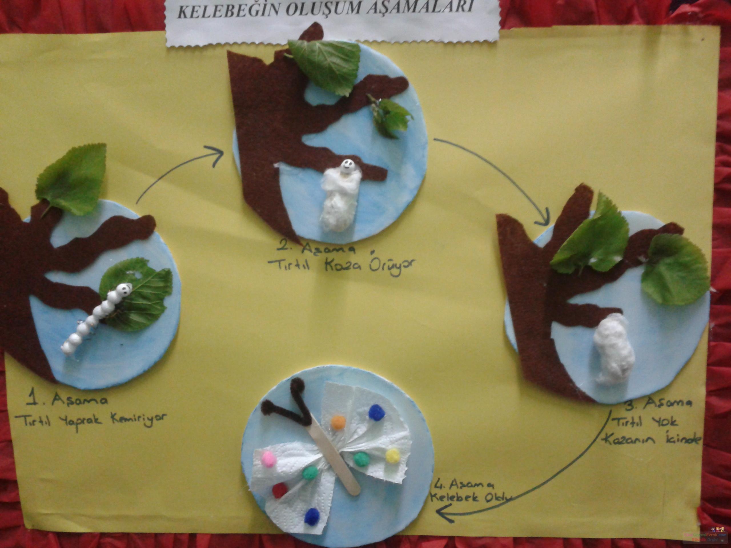 Kelebeğin Oluşum Aşamaları Preschool Activity