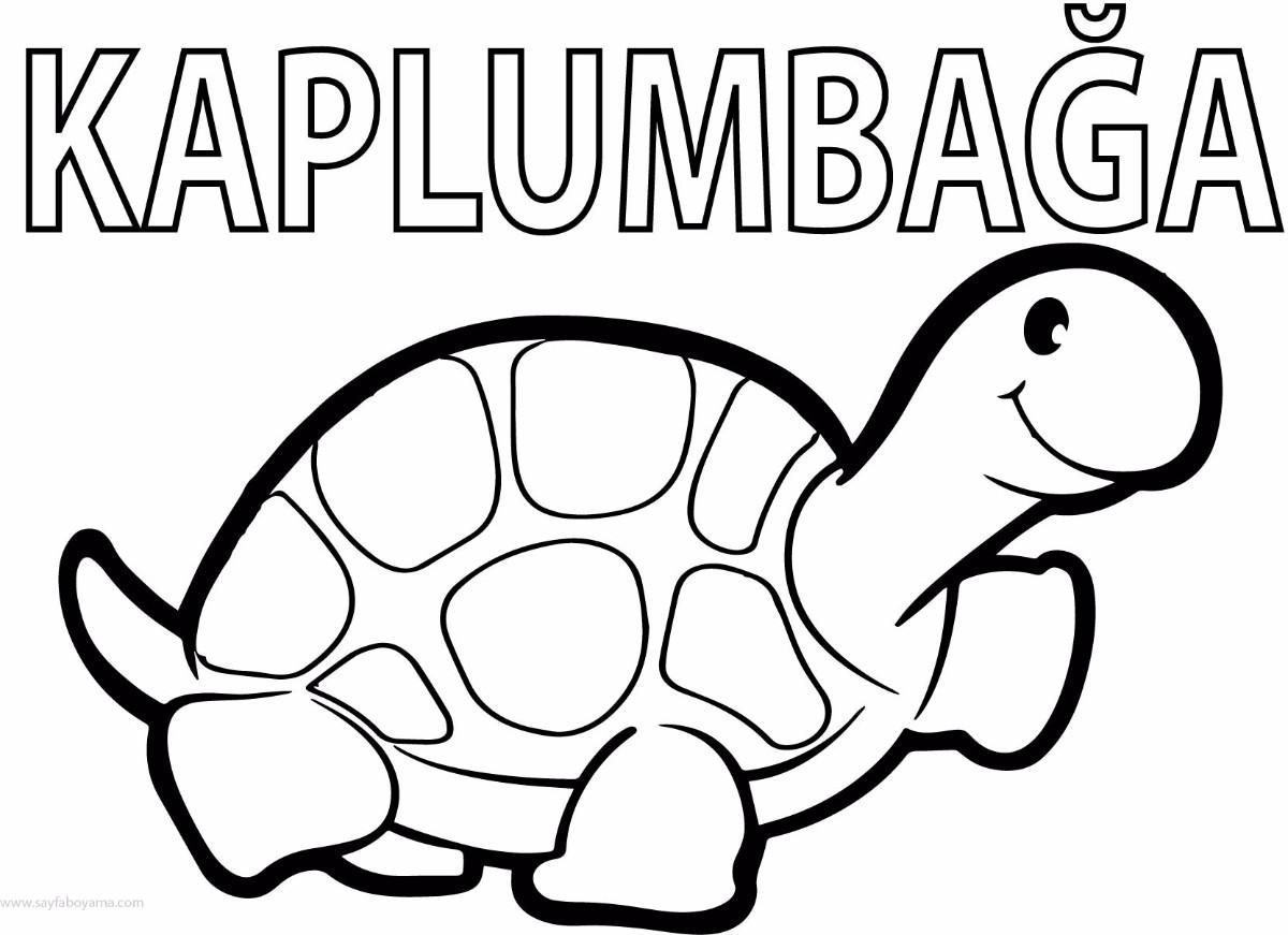 Sevimli Kaplumbaga Boyama Sayfasi Preschool Activity